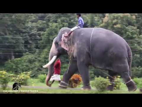 kerala elephant, gejabheeman,puthuppally kesavan, CHANGALA KILUKKAM