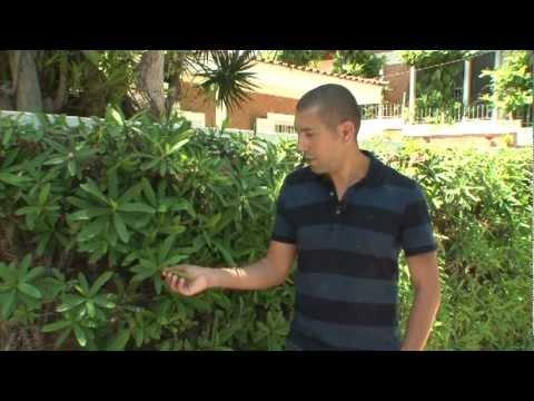 Escolha a cerca viva adequada para sua casa youtube - Telas para sombra ...
