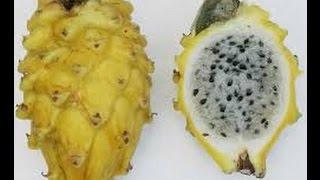 Como Cultivar Pitaya (Fruta Dragón) - TvAgro por Juan Gonzalo Angel