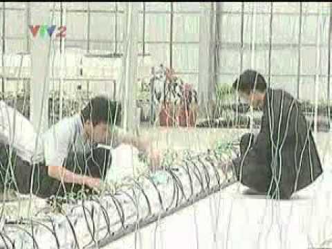 Kỹ thuật trồng rau sạch an toàn - Trồng rau thủy canh - Phần 1