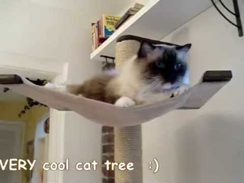 Scandicat Wall Mounted Cat Tree - YouTube