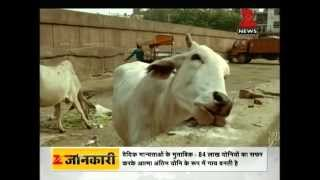 DNA: Benefits of cow dung and cow urine (Gomutra)