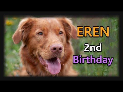 Eren the Toller - 2 years