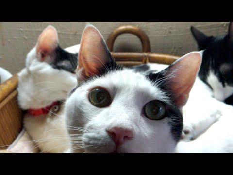 かご猫LIVE配信 200402