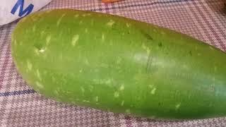 Bangla lau kodu growing in our garden London Bengali favourite vegetable