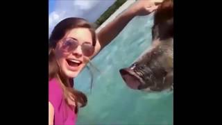 Cute And Funny Animals Just Being Themselves