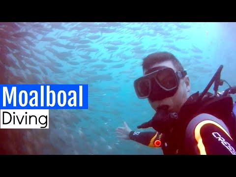 MOALBOAL IS AMAZING! | DIVING IN MOABOAL PHILIPPINES