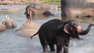 Elefante Lakshmi tomando baño en Hampi INDIA
