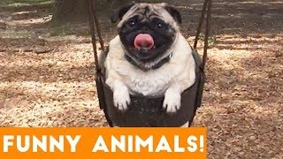Funniest Pets & Animals of the Week Compilation with Animal Facts January 2019 | Funny Pet Videos