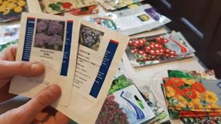 ЧТО ПОСЕЯТЬ В ЯНВАРЕ. в какие СРОКИ я сею цветы. сроки посева семенами