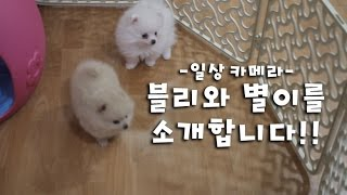 [일상] 새로운 가족 블리와 별이를 소개합니다!
