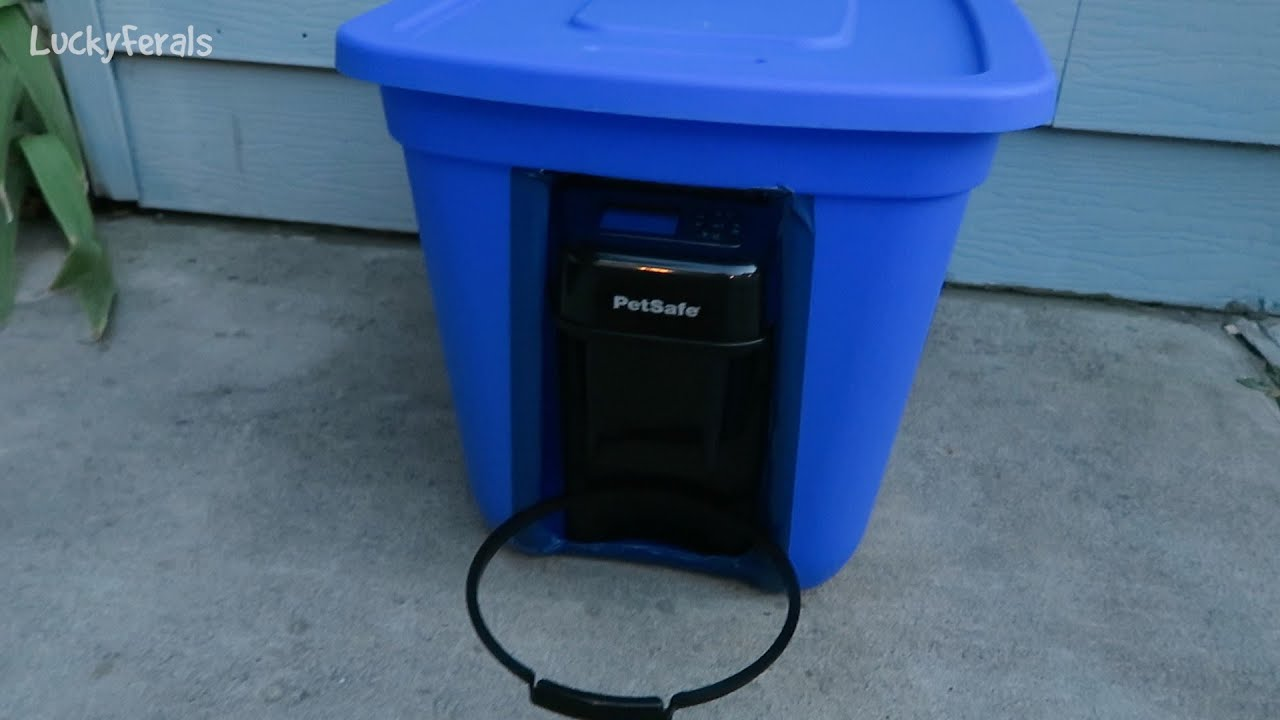 Raccoon Proof Feral Cat Feeder Setup Youtube