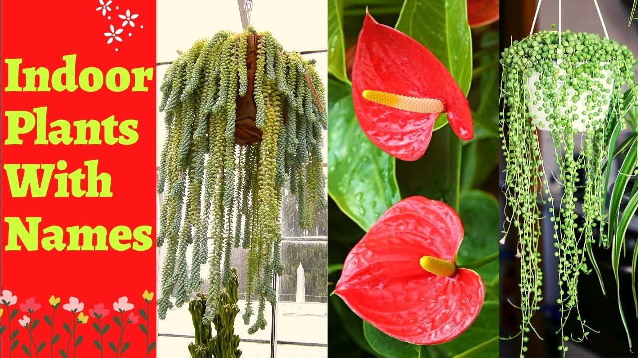 Indoor Plants With Names And Pictures|Types Of Indoor ...