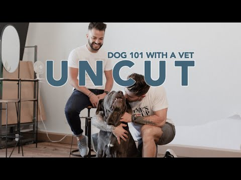 UNCUT: VETERINARIAN GIVES US BEST SECRETS FOR RAISING A DOG
