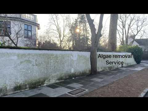 Render cleaning, removing algae from painted render using Doff steam cleaning in Richmond London