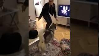 Dog dancing with Iva Ikon :)