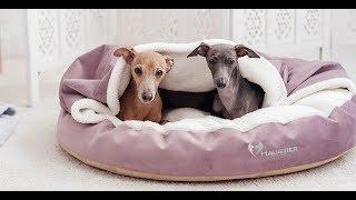 Лежак для собак Lounge від Haustier з покривалом