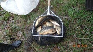 Запуск рыбы в платный пруд(Платная рыбалка в Кишкино. Запуск рыбы 03.05.2016 http://www.наша-тема.рф/viewtopic.php?f=147&t=2602., 2016-05-03T18:51:29.000Z)