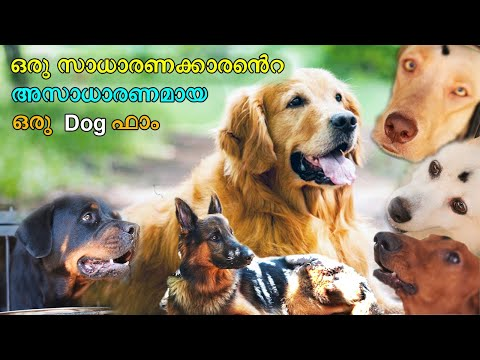 / / Biggest Dog kennel at kollam