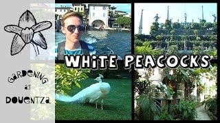 White Peacocks, Boats & Unicorns - Isola Bella, Italy