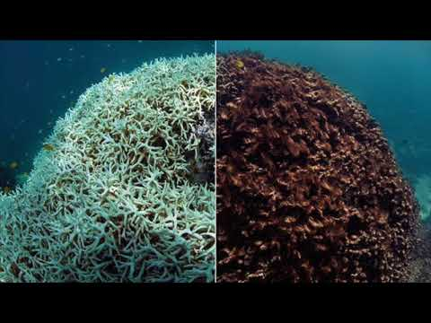 ISS330B South China Sea Pollution