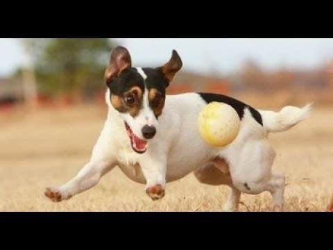 Top 10 Most Playful Dogs That Are Highly Energetic