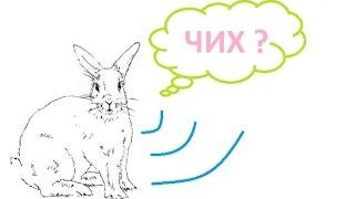 как чихает крольчиха(Заснял интересное видео, как чихает здоровая крольчиха. Ей в нос попала пыль от сена., 2016-08-09T18:48:06.000Z)