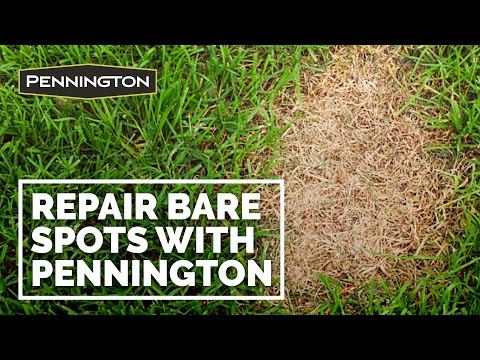 Pennington One Step Complete – Repair Bare Spots in 2 Weeks or Less