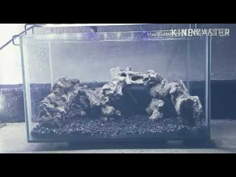 membuat-aquascape-tema-hutan-tropis-step-by-step