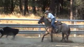 Horse Training, Team Roping & Lessons at PHA week 8-25-13