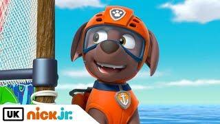 Paw Patrol |  Pups Save a Windsurfing Pig | Nick Jr. UK