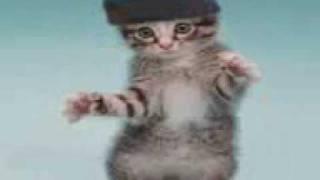 Gatos Raperos.3gp thumbnail