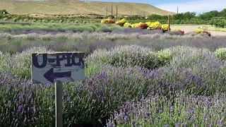 Sage Creations Organic Farm in Palisade, Colorado.