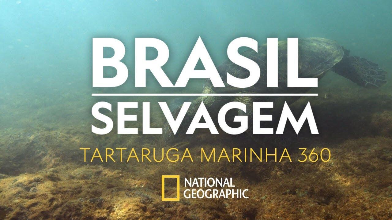 BRASIL SELVAGEM   Tartaruga Marinha   360°
