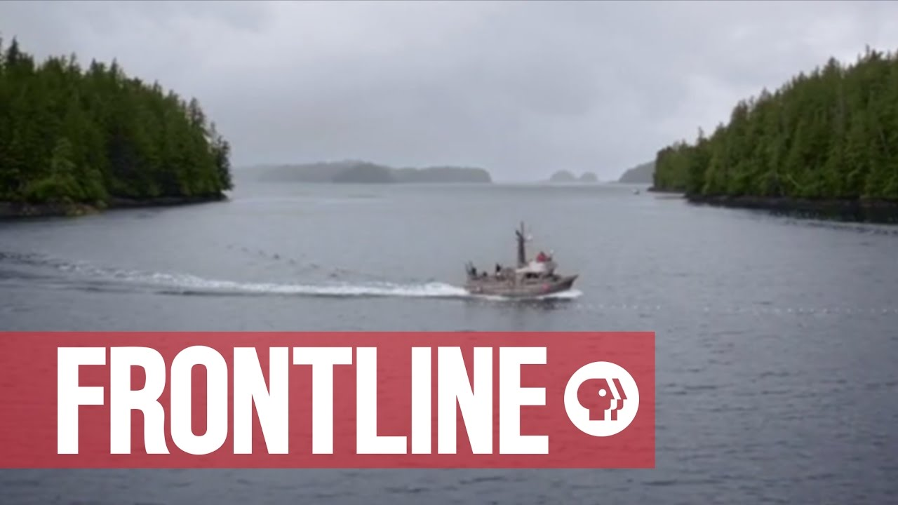 Farmed vs. Wild Salmon Fishing in Alaska | The Fish on My Plate | FRONTLINE - In Alaska, the idea of protecting wild fish is written into the state's constitution.