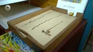 Herbarium Frisicum hâldt iepen dagen