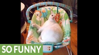 Cat enjoys baby swing way more than actual baby