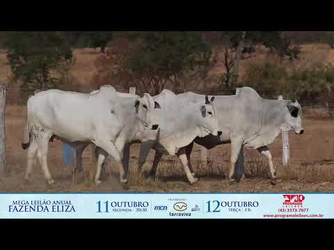 LOTE 194