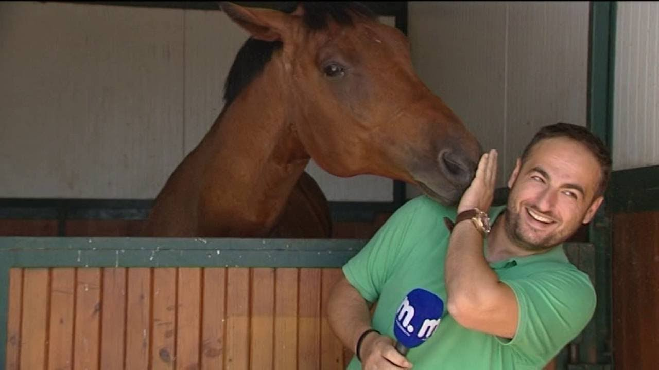 Horse Loves Reporter (Original)