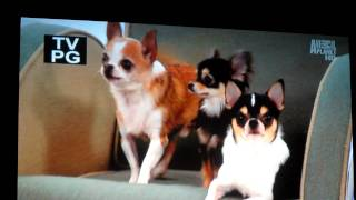 Bebe & Friends on Most Extreme Dogs 101 Part 1