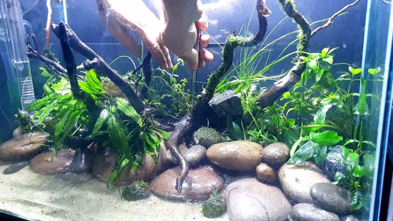 Pebble Aquascape Tutorial Rare Hardscape Nature Aquarium Youtube