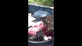 Piggy Soup - Refugio, TX October 21, 2012