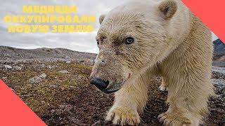 видео: Стало известно, что сделают с медведями, оккупировавшими Новую Землю