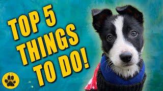 Training my Border Collie Puppy