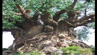 Самые красивые картинки деревьев. Деревья в самых красивых картинках