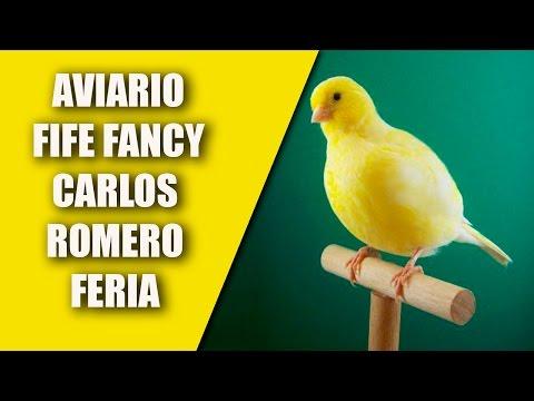 Visitando Aviarios (Aviario Fife Fancy,  Carlos Romero Feria) 2017