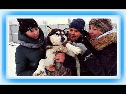 Танцуют все! 1 серия документального фильма Танцы с собаками/Dances with dogs