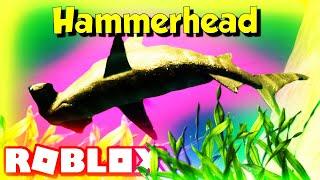 Roblox Hammerhead Shark Marine World (Roblox Wild Life)