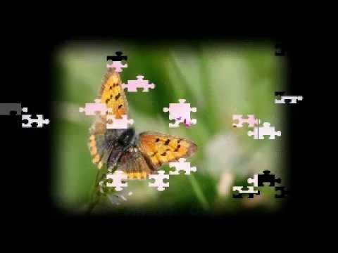 [karaoke nhacthanh.net] Chúa là con đường - Phancicô