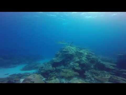 Palau trip Feb 2015